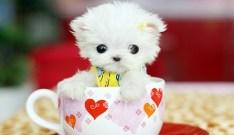 Puppy-16