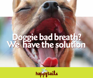 Natural Ways To Freshen Dogs Breath