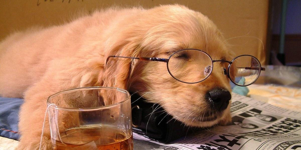 Image result for sleepy dog