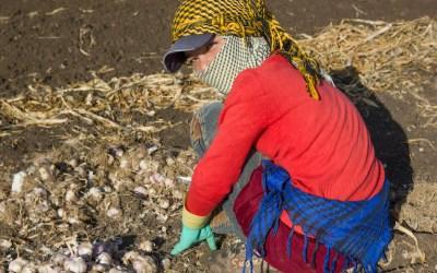 ارتفاع ظاهرة عمالة الأطفال إلى مستوى غير مسبوق في لبنان… والفتيات يشكّلن الفئة الأكبر