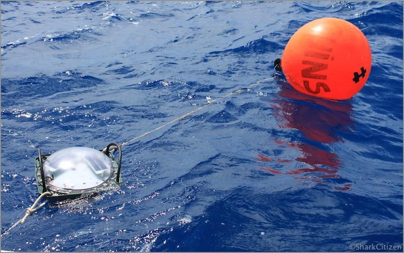 Cap Requin : résultats au 1er mars 2014