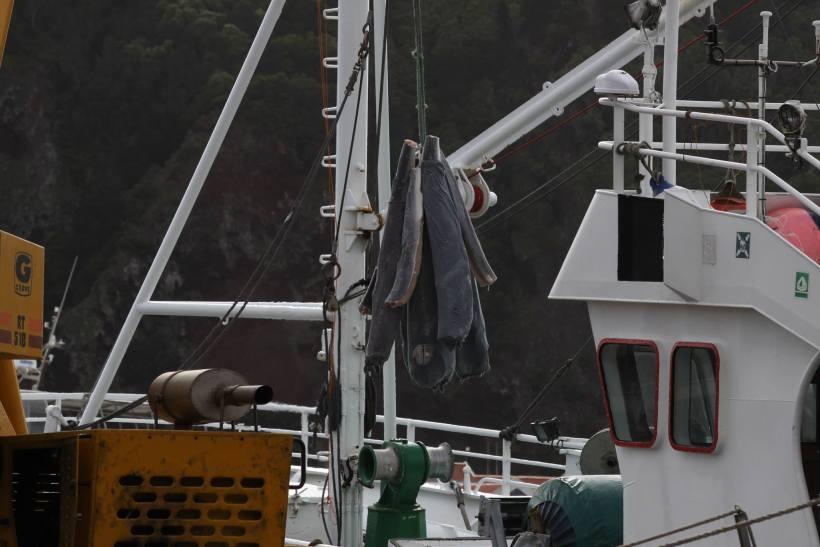 Un massacre de requins labellisé MSC ?