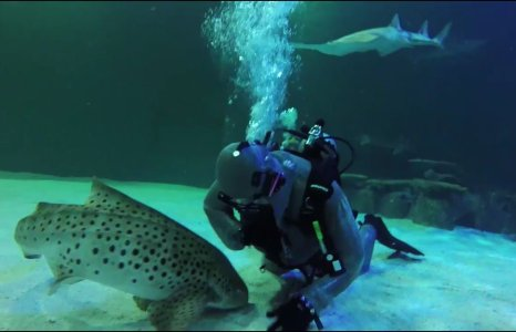 The Klute: Poet Laureate of Ocean Predators