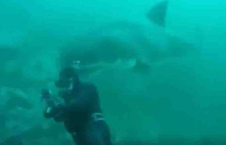 VIDEO: Great white bumps oblivious diver in South Africa
