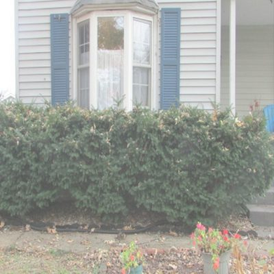 removing evergreen bushes, evergreen bushes removal, evergreen bushes