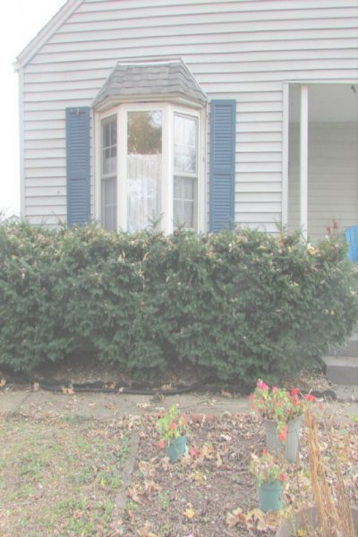 removing evergreen bushes, evergreen bushes removal, evergreen bushes