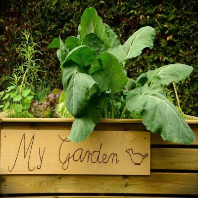 Raised Garden Beds That You Can DIY
