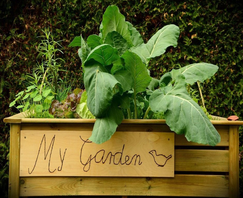 Raised Garden Beds That You Can DIY For Cheap