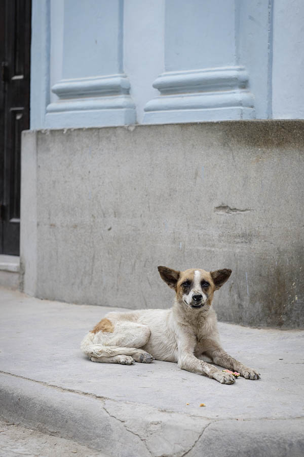 Dogs-of-Cuba-Sharon-Blance-Melbourne-photographer-PWS011-0458