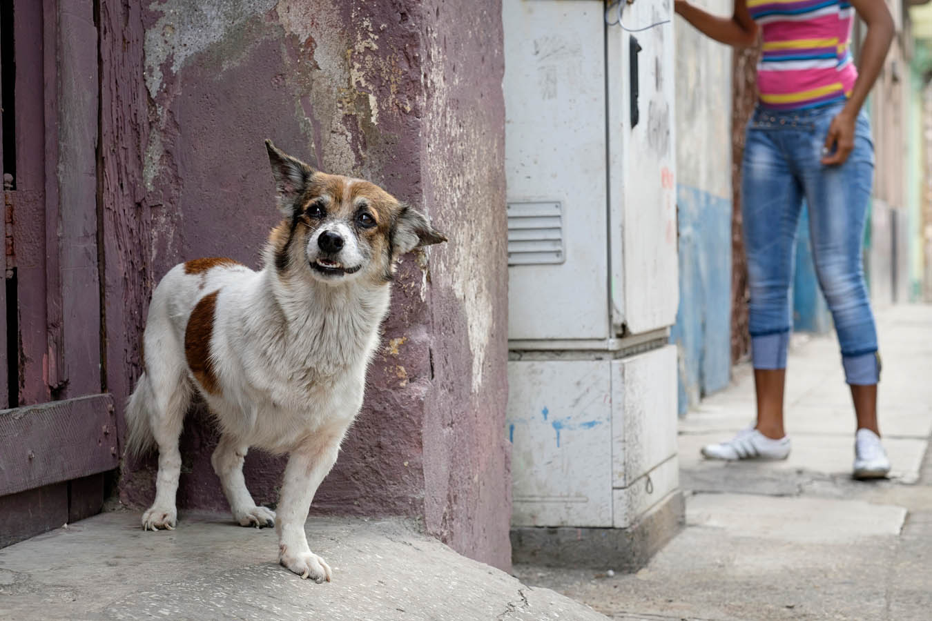 Dogs-of-Cuba-Sharon-Blance-Melbourne-photographer-PWS011-1605
