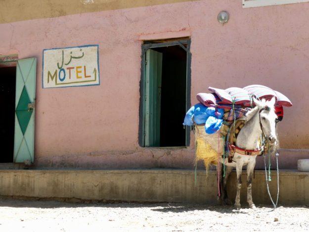A hardworking mule taking a well earned break
