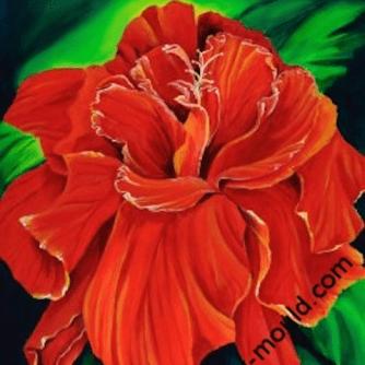 Hibicsus Bonnie's Red
