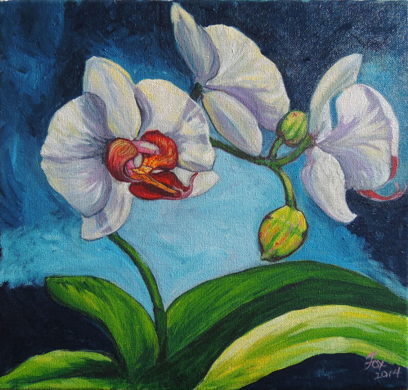 White Phalaenopsis Orchid Paintings