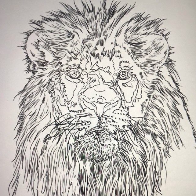 Tattoo flash of a lion for Sharp Art Studios