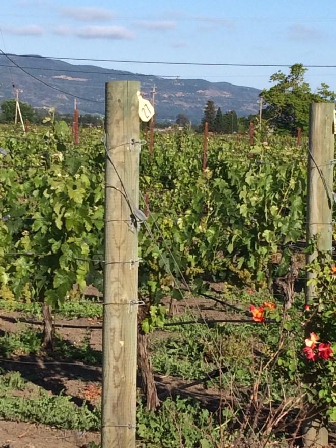Kasten Wines