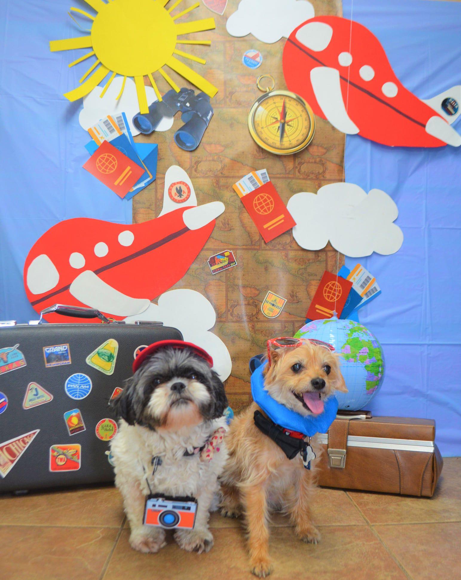 Kountry Pet Resort is one of the top pet groomers in Kane County (Kountry Pet Resort via Facebook)