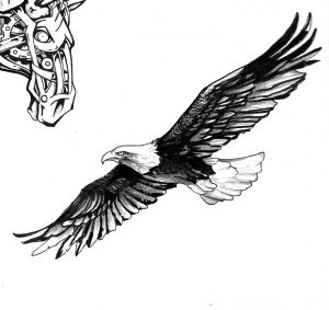 eagle sketch