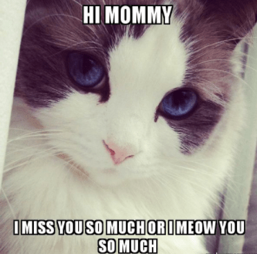 Top 5 Funny Miss You Memes Funniest Memes Ever