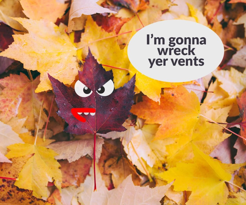A picture of an animated leaf who is angry. The leaf is a shade of purple and he has angry eyes and large red lips with sharp teeth. He is saying 'I'm going to wreck yer vents'