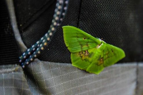 Blinder Passagier auf Julias Rucksack