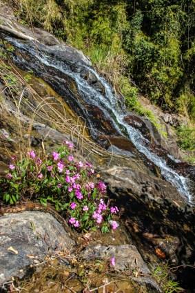 Wasserfall im Dschungel