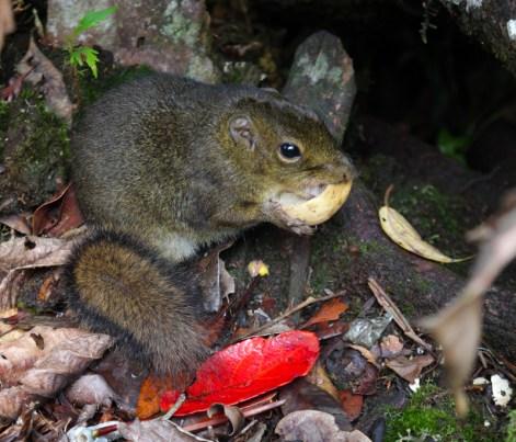 Eichhörnchen wuseln bei den Schutzhütten umher