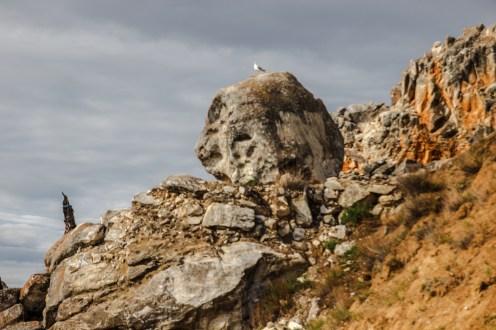 Möwe am Baikalsee