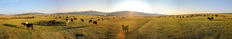 IMG_7871_panorama
