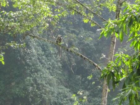 Lemuren bei den Jhinudanda Hot Springs