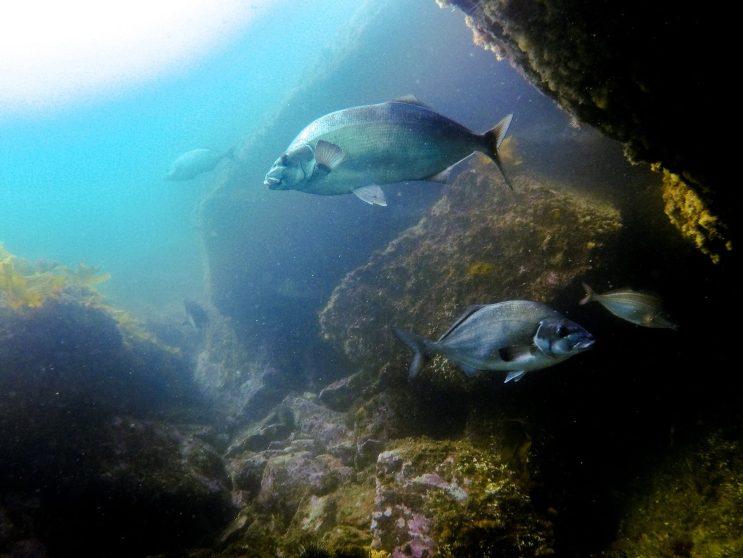 Tauchen im Milford Sound