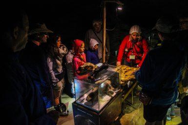Höhlenbärknochenfunde in der Križna Höhle