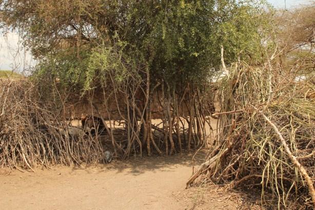 Ein Schutzwall umsäumt Haus und Hof der Datoga Familie