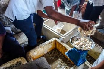 Fischmarkt in Stone Town