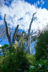 Wald im Mores Reserve