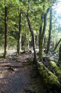 Wald vom Greenstone-Caples Track