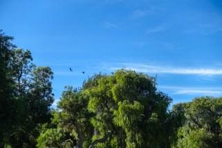 Kakadus fliegen über uns hinweg