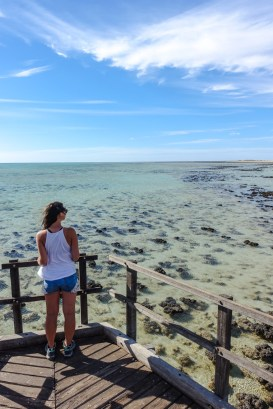 Stromatolithen im Hamelin Pool