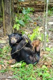 Kokosnuss gehört zu den Lieblingsspeisen der Bären