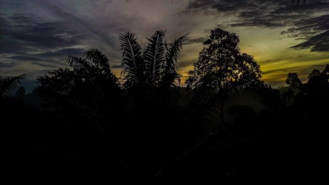 Abendlicher Ausblick von unserem Zuhause im Dschungel