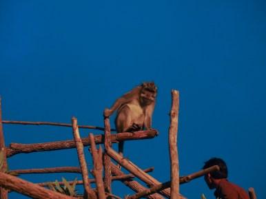 Äffchen am Gipfel des Moutn Batur