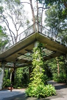Treetop Walk im Botanischen Garten
