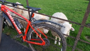 sheep_eating_bike!