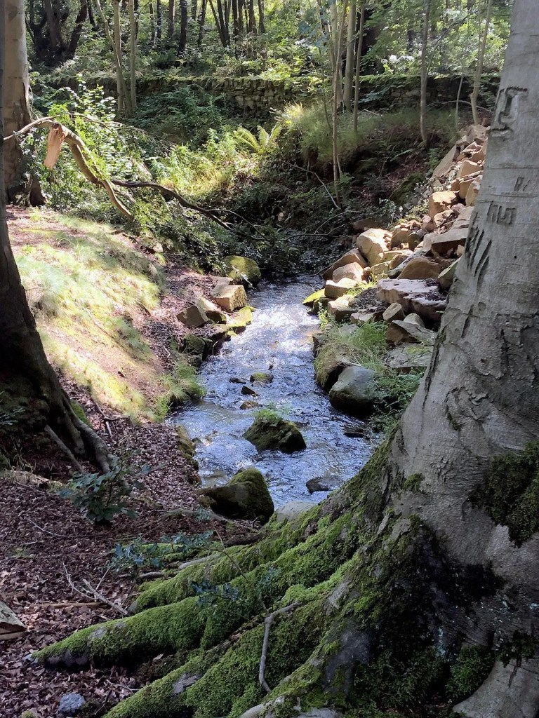 Stream at Storrs Wood