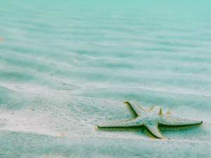 close up of starfish on the sand
