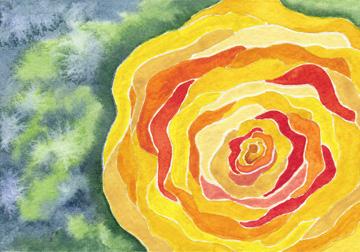 Ranunculus, watercolor on 140 lb. cold press paper. 4 x 6 postcard © 20 13 Sheila Delgado