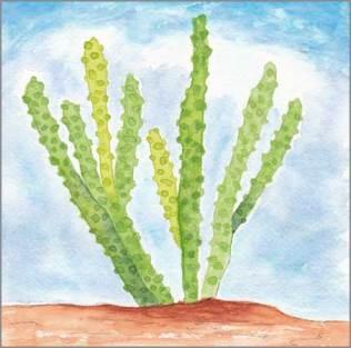 Totem Pole Cactus. 6 x 6 in. acrylic on Arches 140 lb. cold pressed paper. © 2017 Sheila Delgado
