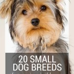 20 Popular Cute Small Dog Breeds Sheknows