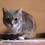 The Best Pet Food Feeders Currently Available On Amazon Sheknows