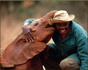 baby elephant and keeper at the Sheldrick Trust outside Nairobi, Kenya