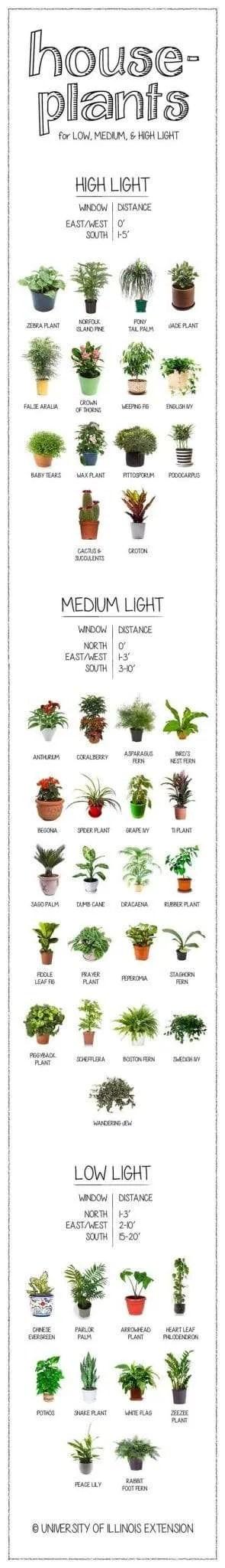 plantlightrequirements